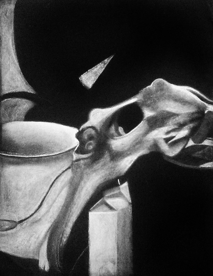 Bone Still Life Print