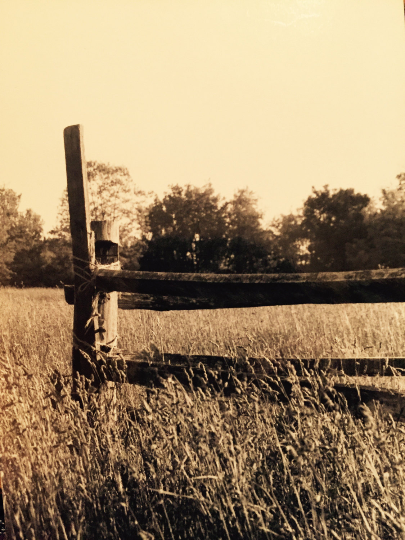 Fence Photography Print