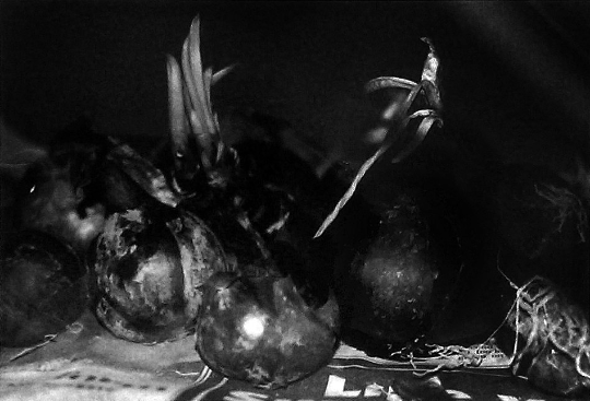 Onions Photography Print