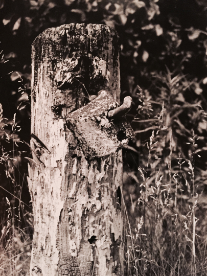 Fence Post Photography Print